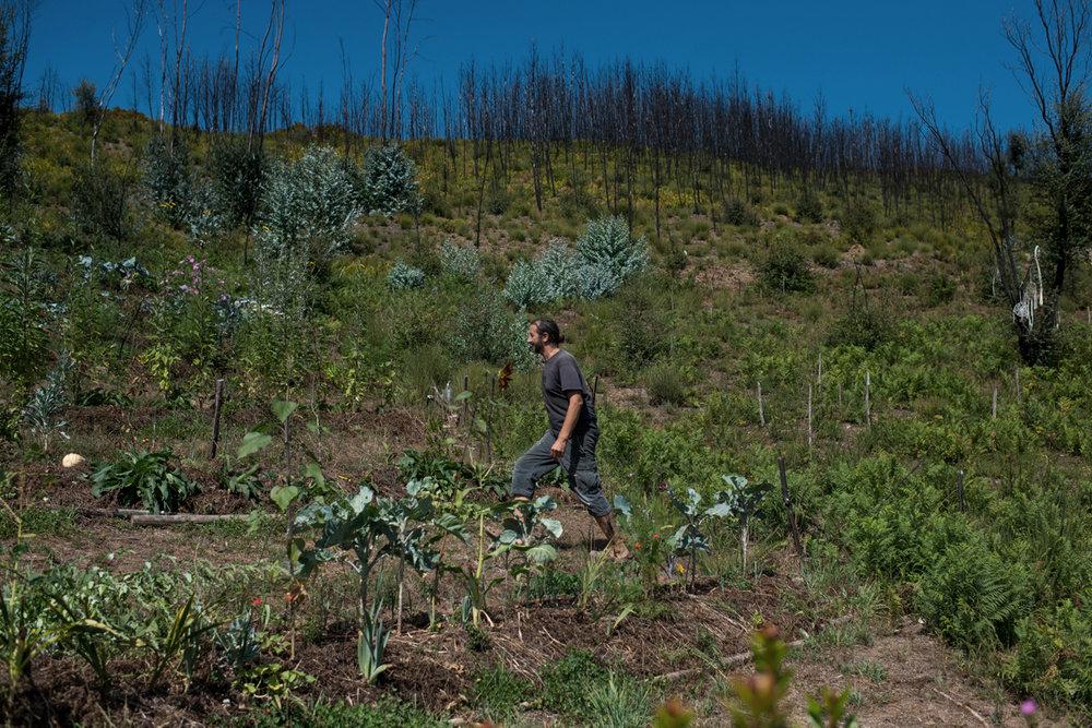 """Miguel Humblet, 48, caminha pelo """"laboratório"""" onde testa a permacultura no terreno do Gravito, em Pedrógão Grande, Portugal. Setembro 2018. © Lucas Landau"""