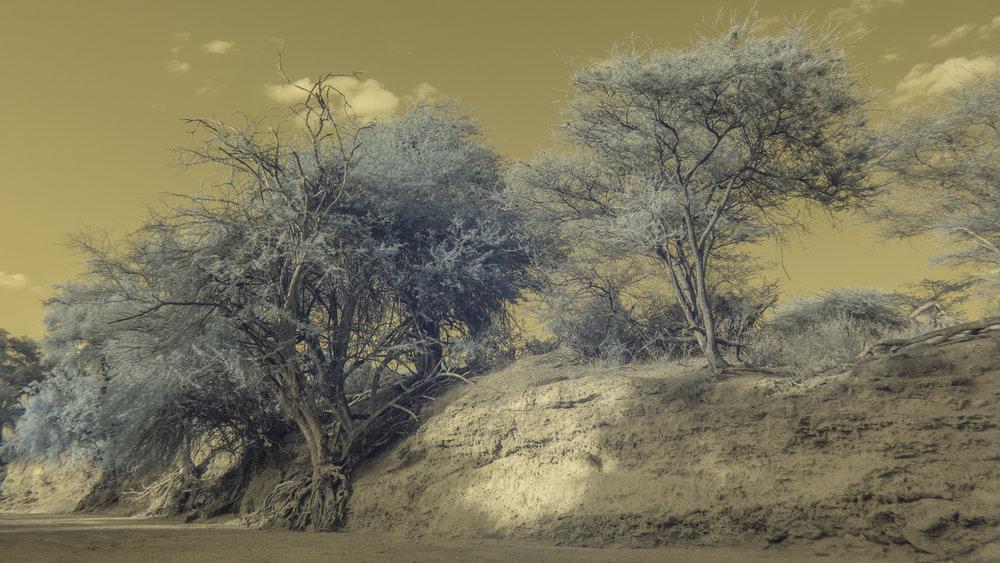 IR_Trees_1.jpg