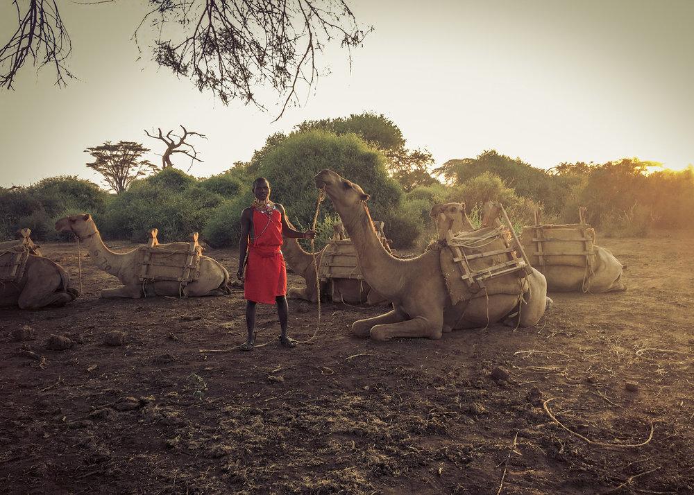 CamelSafari-2_sm.jpg