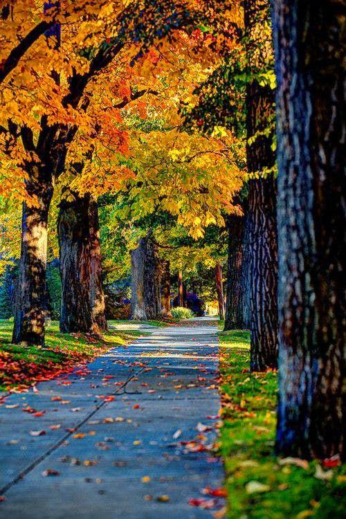 fall sidewalk.jpg