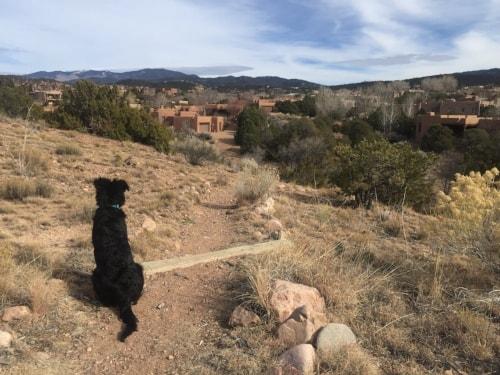 Pups love Santa Fe's great vistas!
