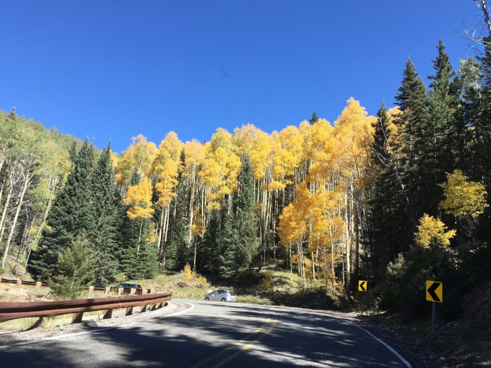 The aspens in Santa Fe National Forest put on a show in October