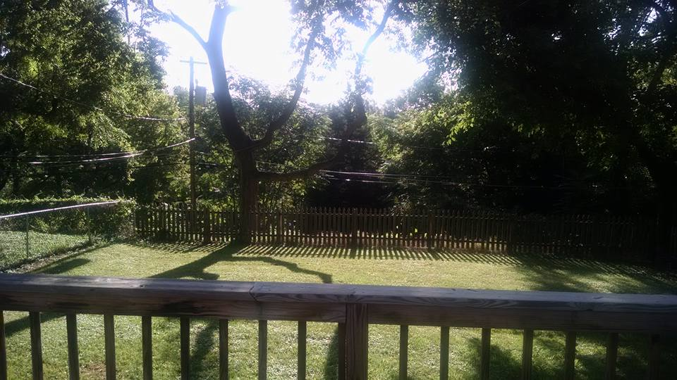 A beautiful and serene morning on the back patio.