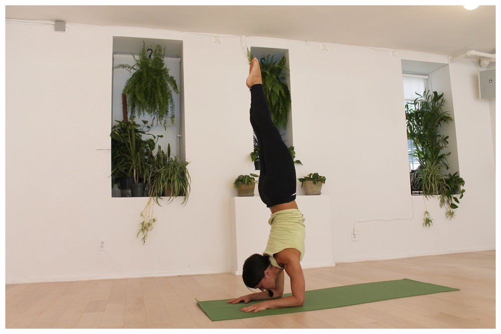 Savitri Vinyasa Flow, Afternoon Express Flow, & Weekend Warrior Flow:  Practices accessible to all levels! Receive teachings for the soul while focussing on strength, alignment, & flexibility.