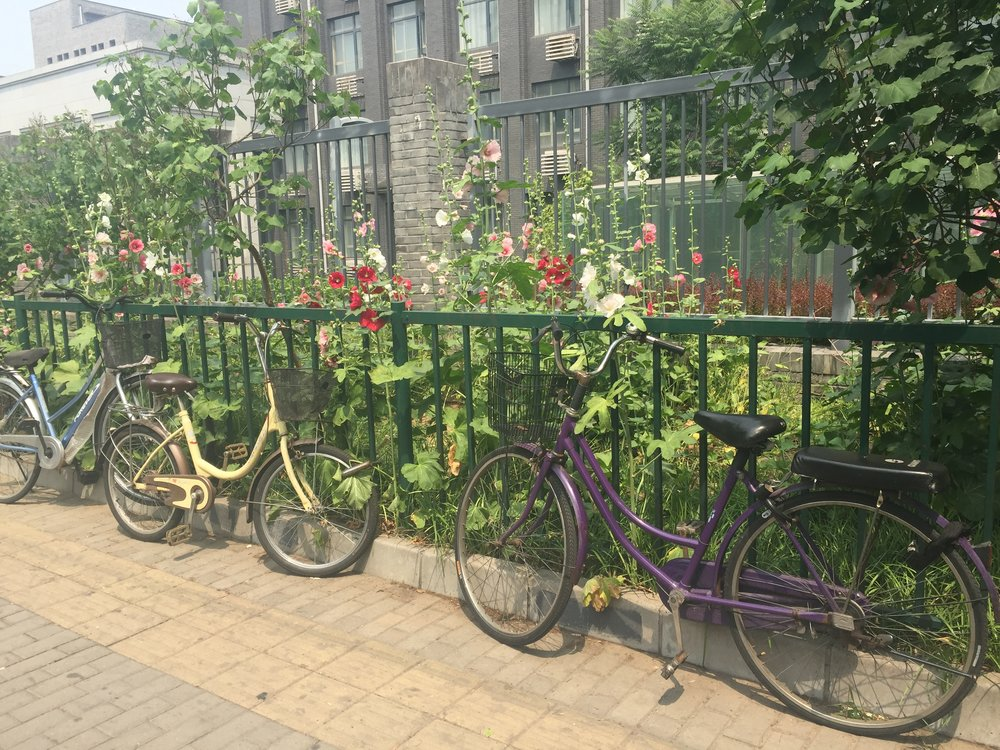Bikes that were parked outside of the Peking University.