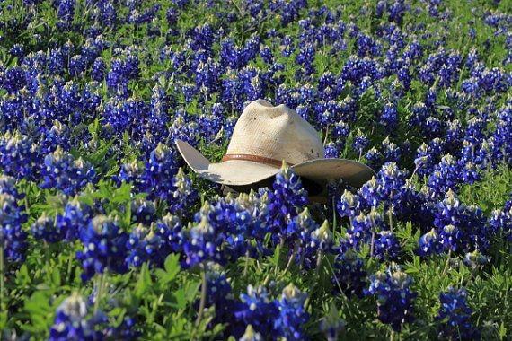 5-Texas-bluebonnets.jpg