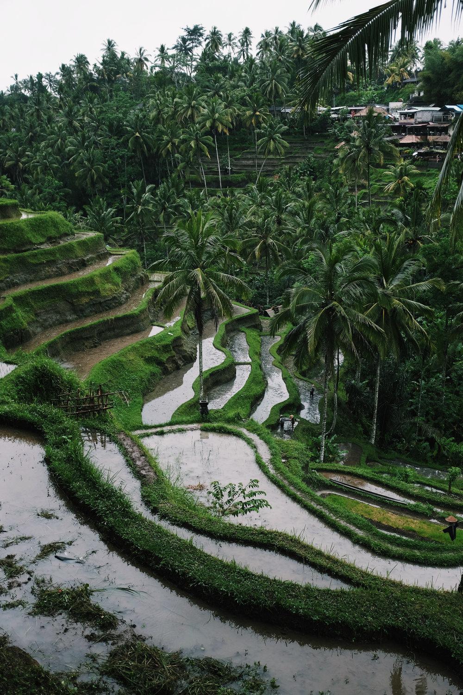Bali-109.jpg