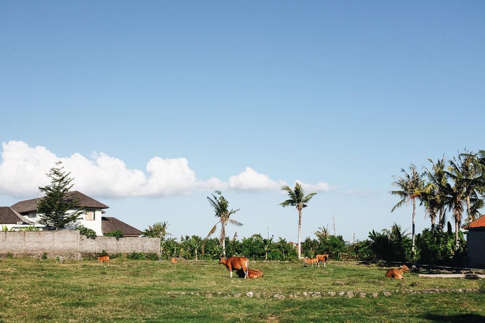 Bali-217.jpg