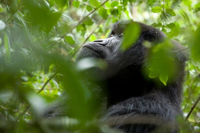 Image Credit:  Wilderness Safaris