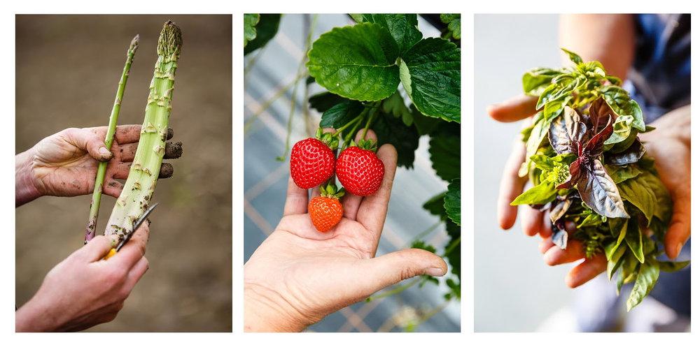 asperge_fraise_basilic.jpg