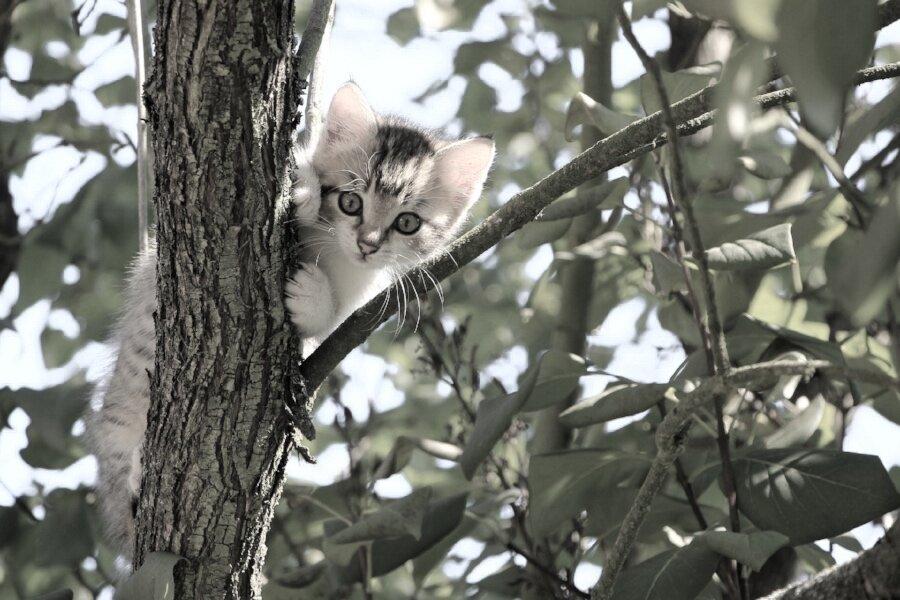 cat-1647775_1920.jpg