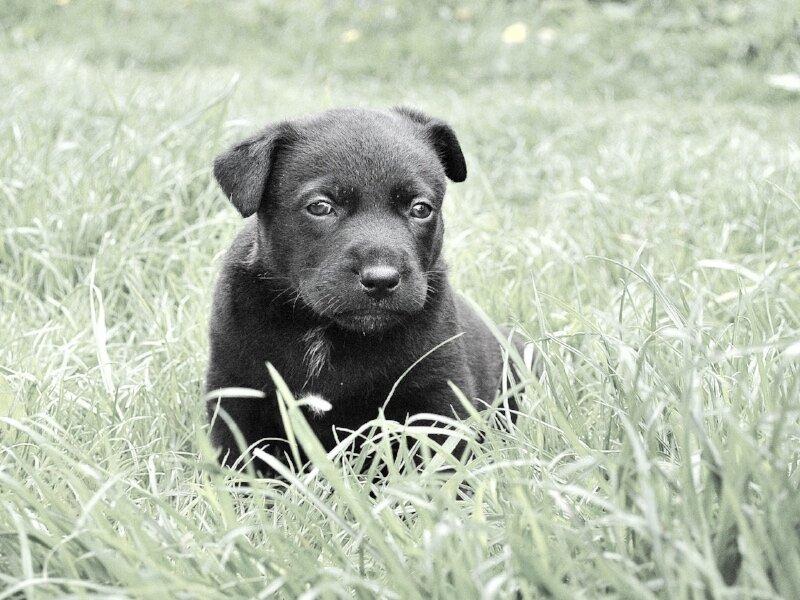 dog-279698_1920.jpg