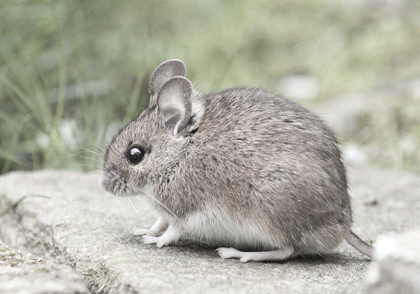 mouse-1974359_1920.jpg