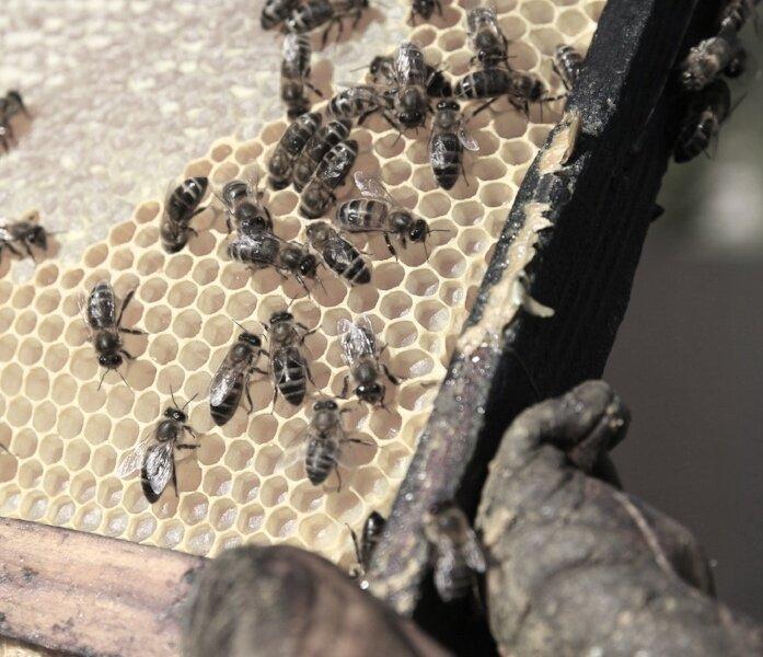 bees and wax.jpg