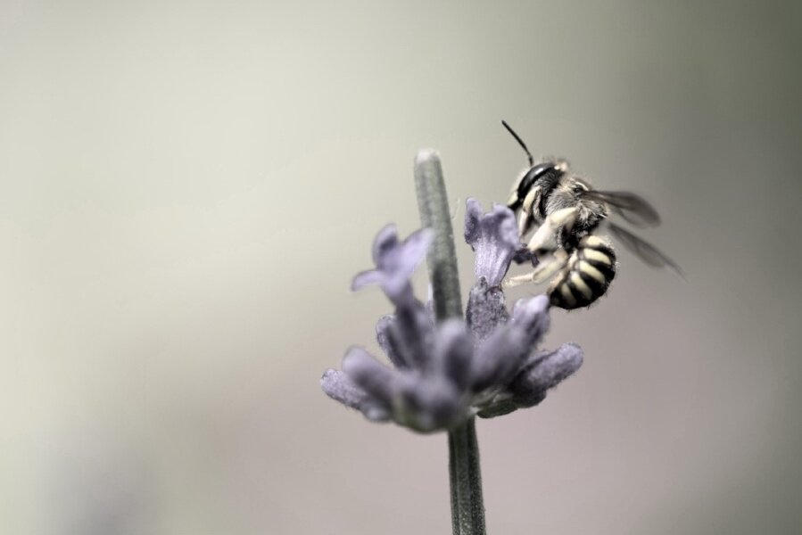Bee with purple flowe (Gyre and Gymble Blog – Weeds and Vinegar).jpg