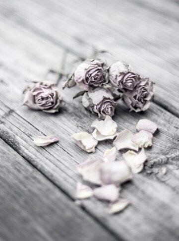 dried roses.jpg