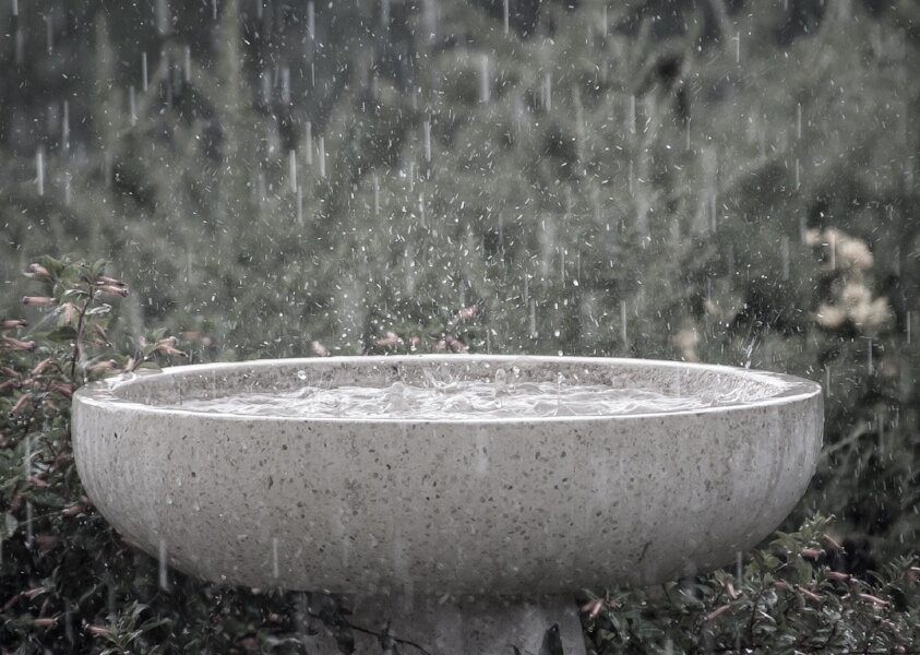 Water bowl rain.jpg