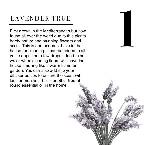 IG Lavender copy 3.001.jpg