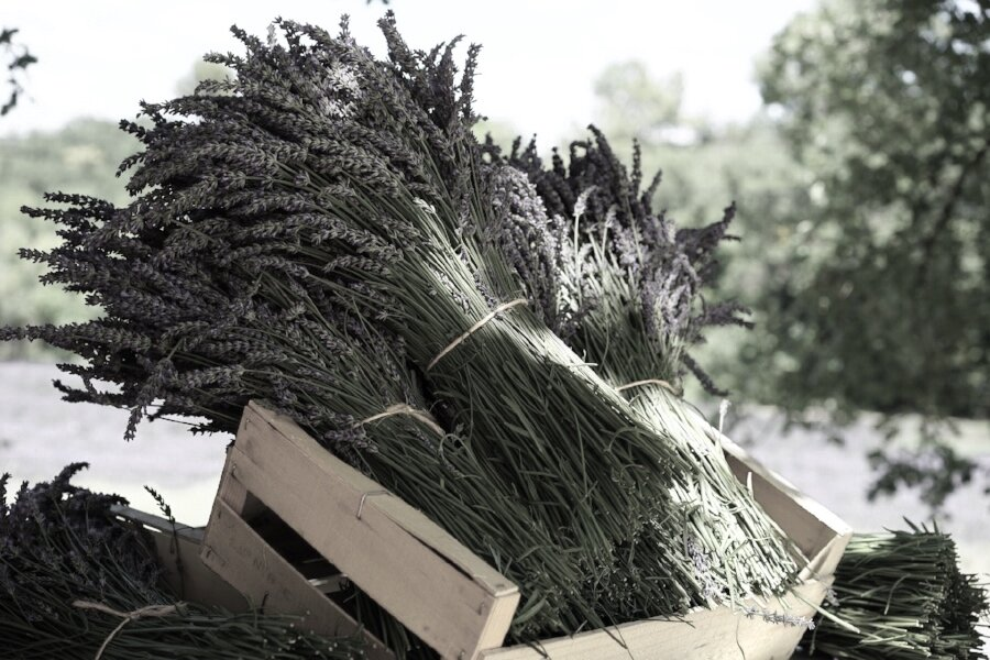 lavender cart.jpg
