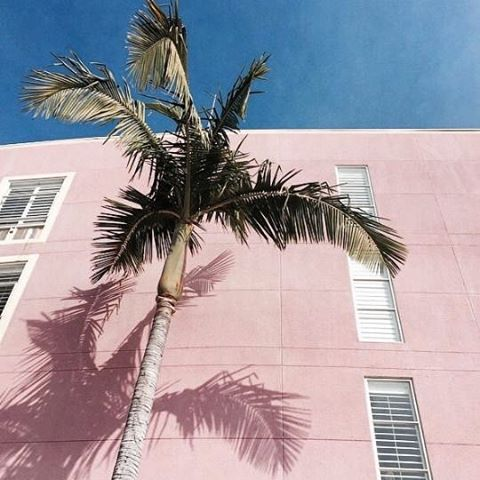 Pink and blue 🌴