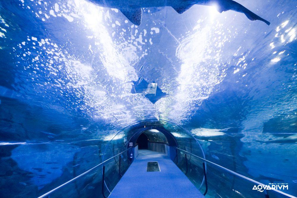 aquariumss.jpg