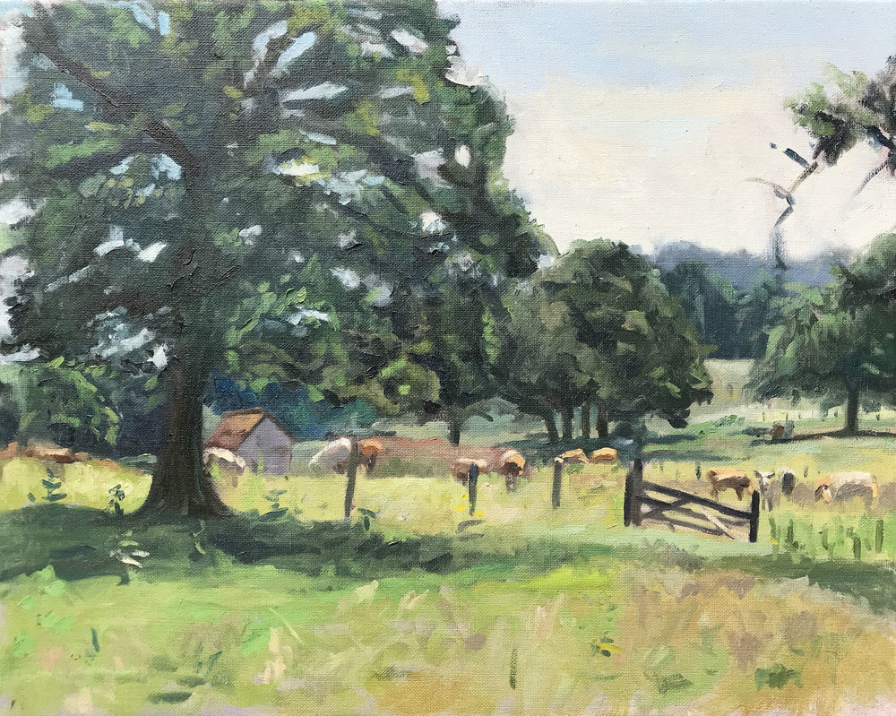 GRAZING COWS, LURGASHALL   2018 | oil on linen | 40x50cm  £825 (unframed)