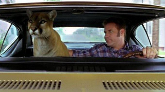 Cougar.jpg