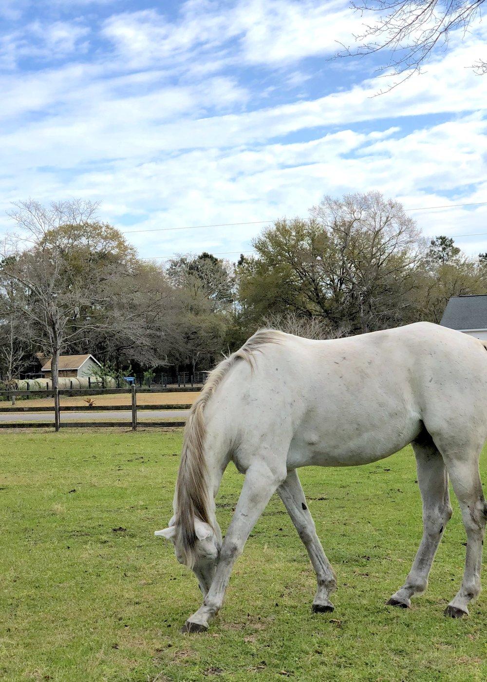 living-high-vibe-video-series-inspiration-unbridled-horses-south-carolina