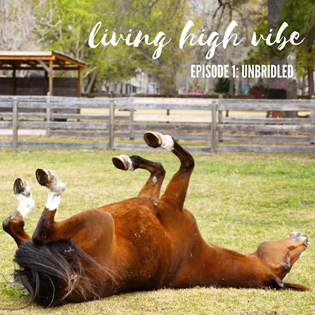 """""""I woke up to the fact that the dreams I had as a kid weren't all coming true."""" ✨ Sound familiar? Kim Hallin (owner of @unbridled_llc) found herself STUCK years ago like so many of us. . . """"As we get older, life happens,"""" she says. """"We get focused on career, money and expectations that other people have for us, and we make decisions about those things. We head down a path. It was my horses that helped me see where I was and gave me the courage to change the course."""" . . 👉🏼 Click the link in our bio to see how Kim herself became UNSTUCK and how she's bringing humans and horses together to heal together 🐴❤️ . . **This is the first video in our LIVING HIGH VIBE video series, where we feature unique activities to inspire others to get unstuck! Sign up for our email list to get these videos sent to your inbox** ❤️ #LiveHighVibe"""