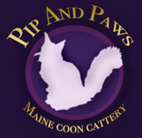 Maine Coons of PipandPaws (Texas)