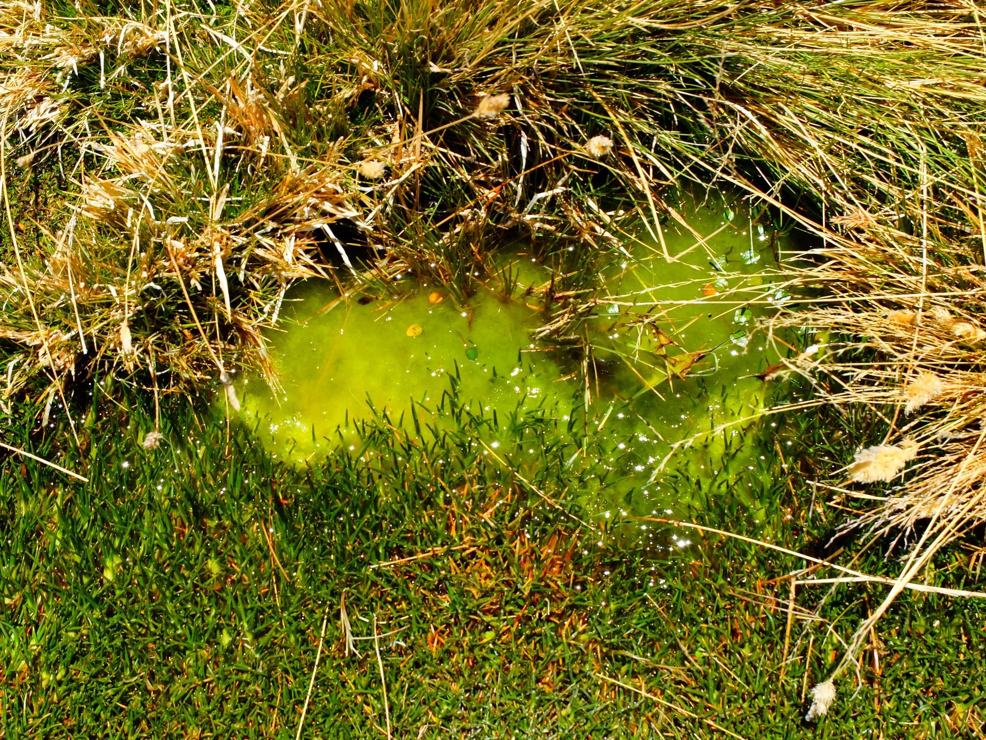 A brilliant green bog
