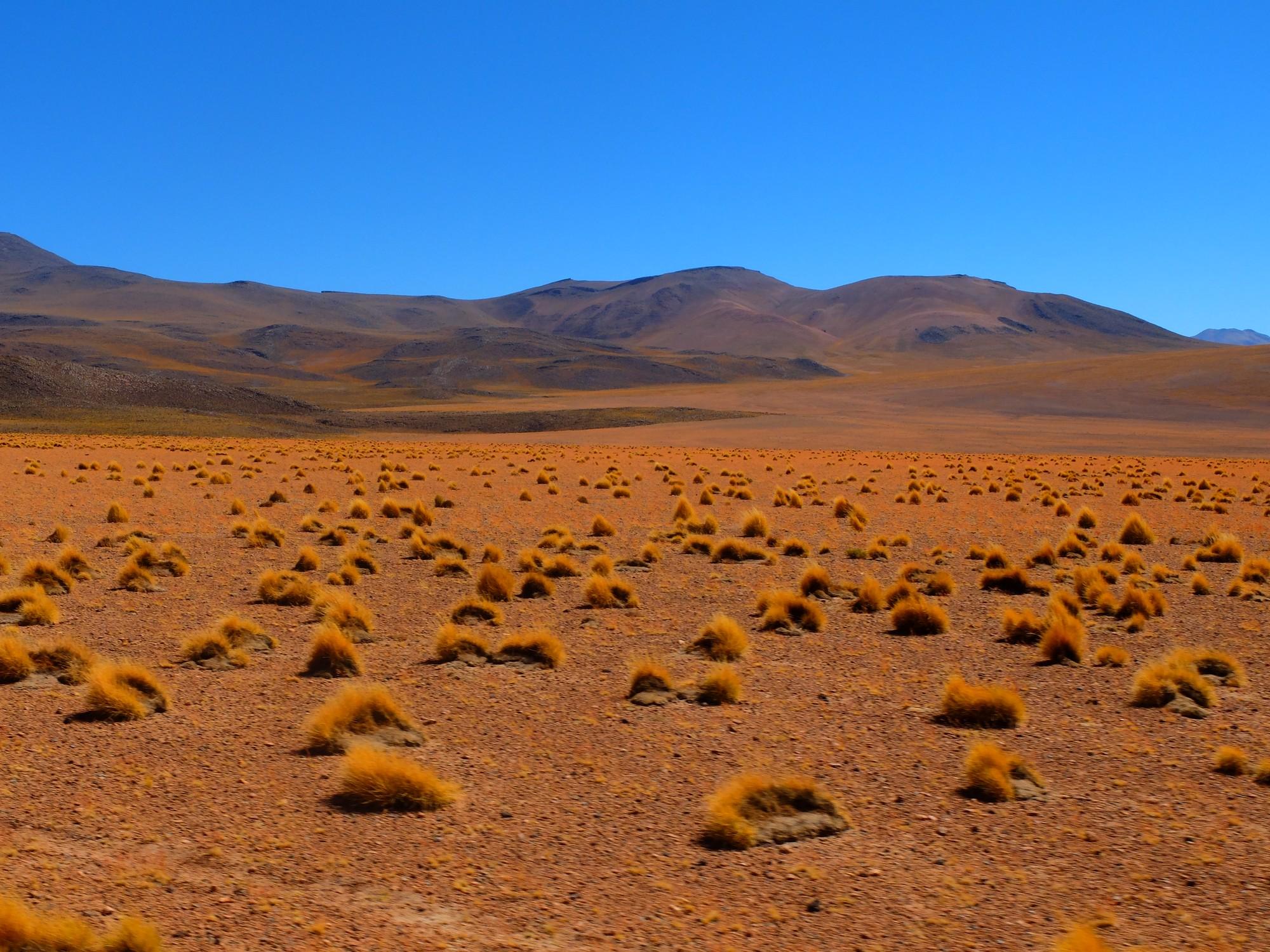 Desert vegetation,