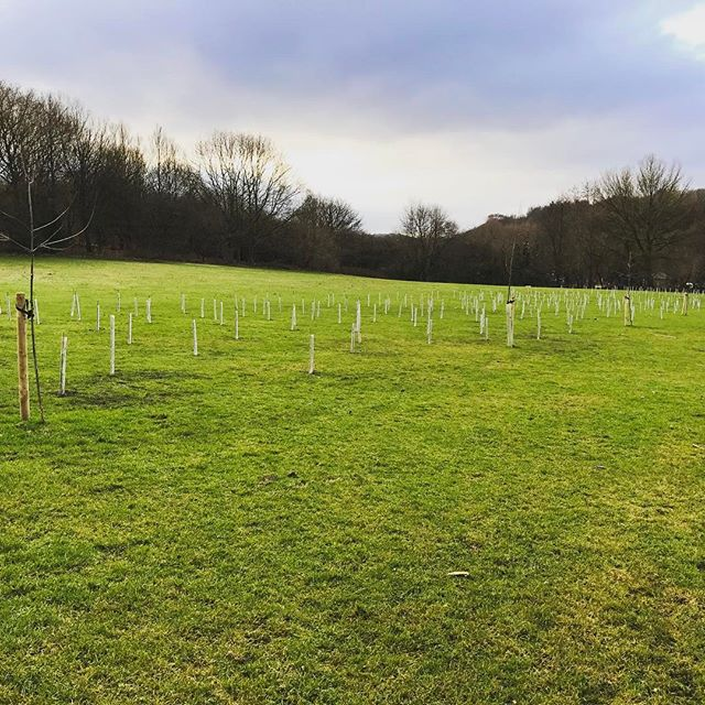 As a local councillor we say we will do things and often it's behind the scenes, hard to see. Last year @tamesidelabour made the pledge to plant 2016 trees, here are just a few of those being planted in #Hyde #Tameside