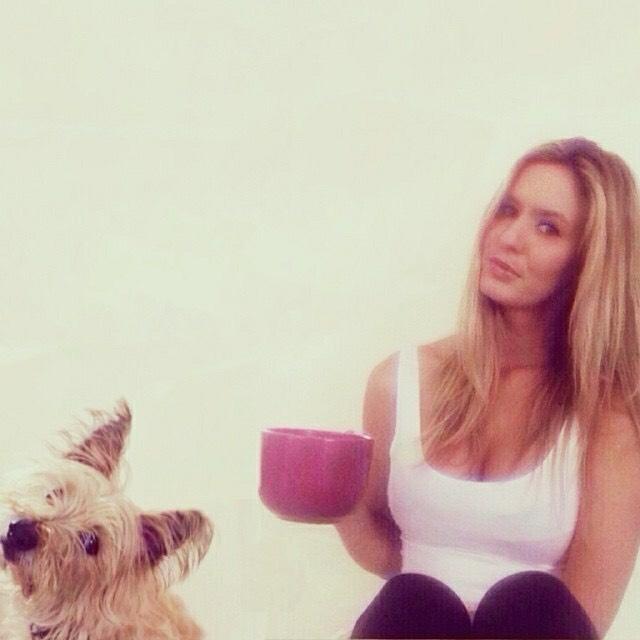 Dog & Kat
