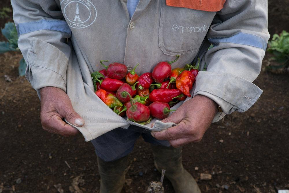 FUNDACIÓN LAS GOLONDRINAS - FARMING