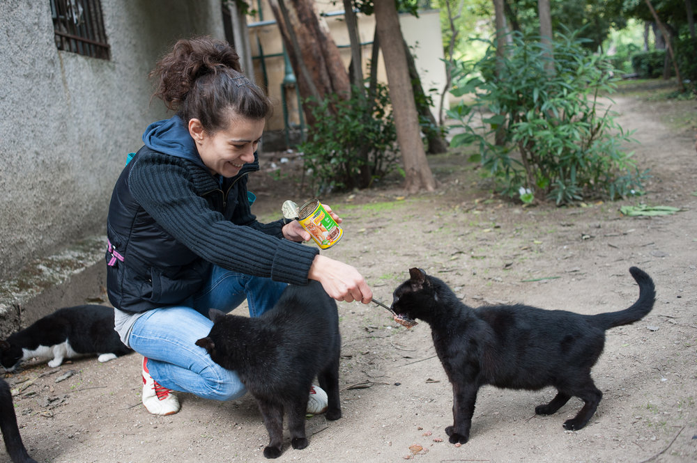 A volunteer for Nine Lives Greece, an animal welfare organization, feeds stray cats.