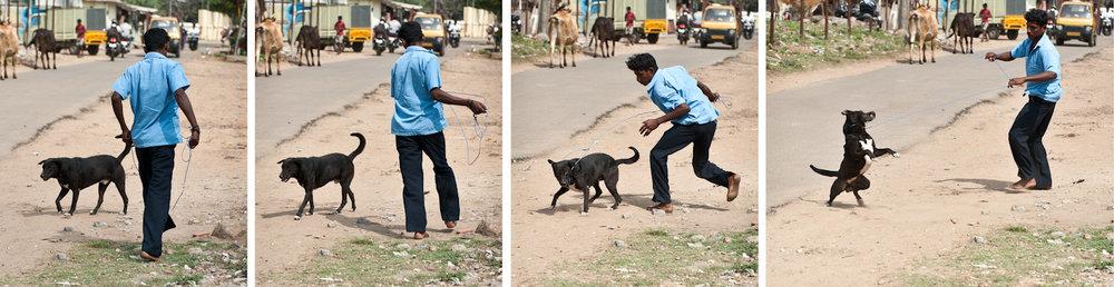 A Blue Cross employee catches a street dog