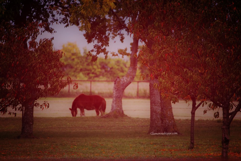 trees and horses with gh words.jpg