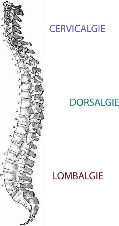 osteopathe-biarritz-colonne-vertébrale.jpg