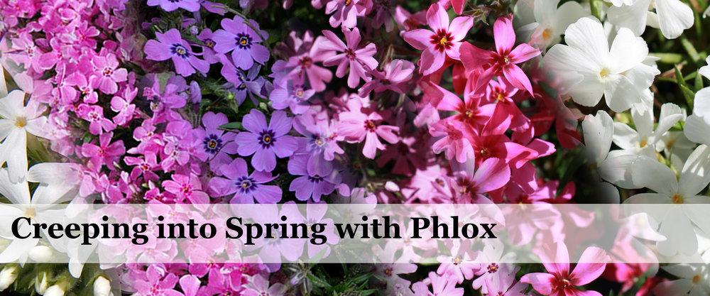 PhloxCreepingBanner.jpg