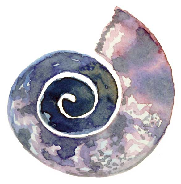 Watercolor-Nautilus-1.jpg