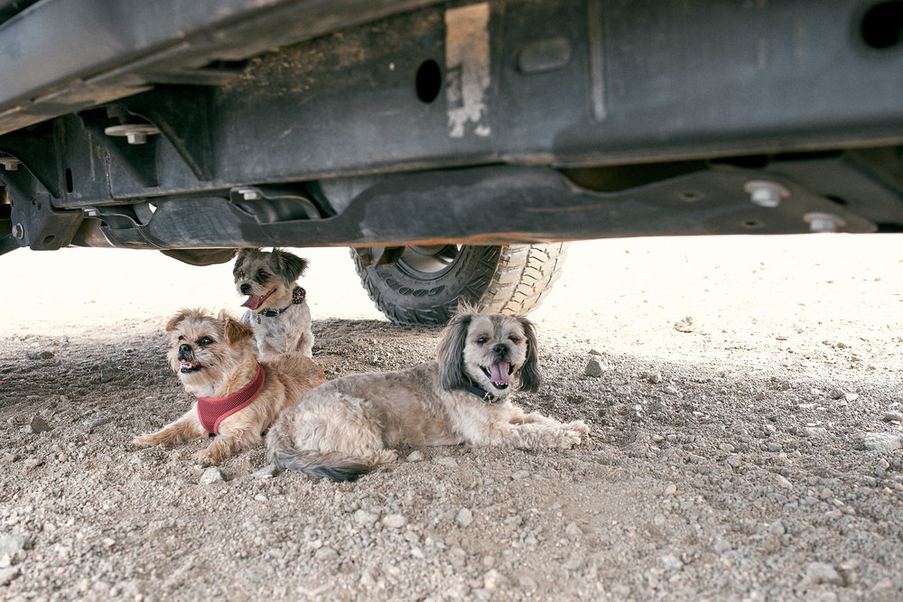 Staying cool underneath the Jeep.