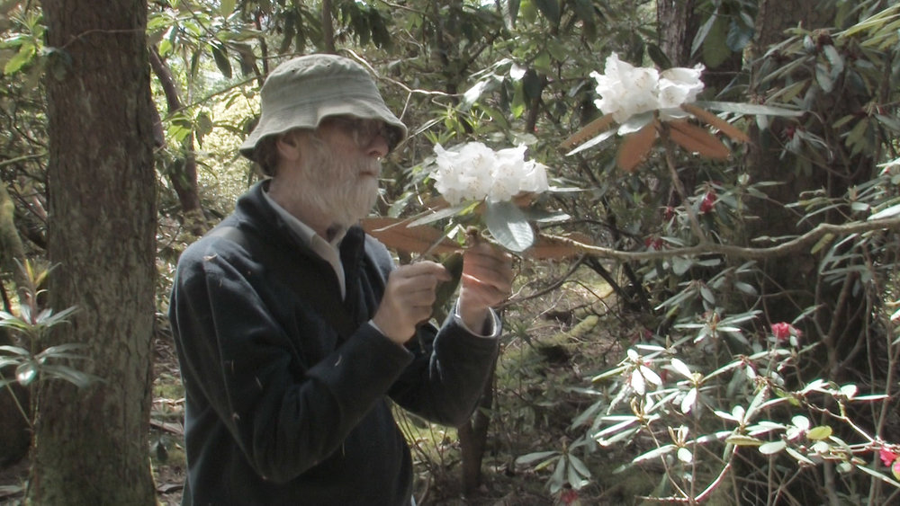 David Chamberlain | Botanist   Formerly a researcher at the Royal Botanic Garden Edinburgh, David Chamberlain is co-author of the IUCN's Red List of Rhododendrons.