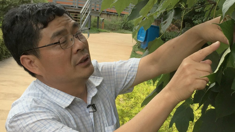 Sun Weibang | Conservation Biologist   Sun Weibang is a senior researcher at the Chinese Academy of Science Kunming Institute of Botany, Yunnan.