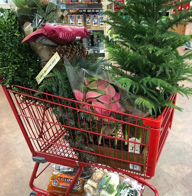 I went to @traderjoes for bread and produce. Looks like I got distracted. Their greenery, poinsettia's and holiday plants were too good and well priced to pass up. #christmasiscoming #itsallinmycart #myindigohouse #traderjoes #longisland #deckingmyhalls #everydaydesign #reallifedesign #mybhgstyle #