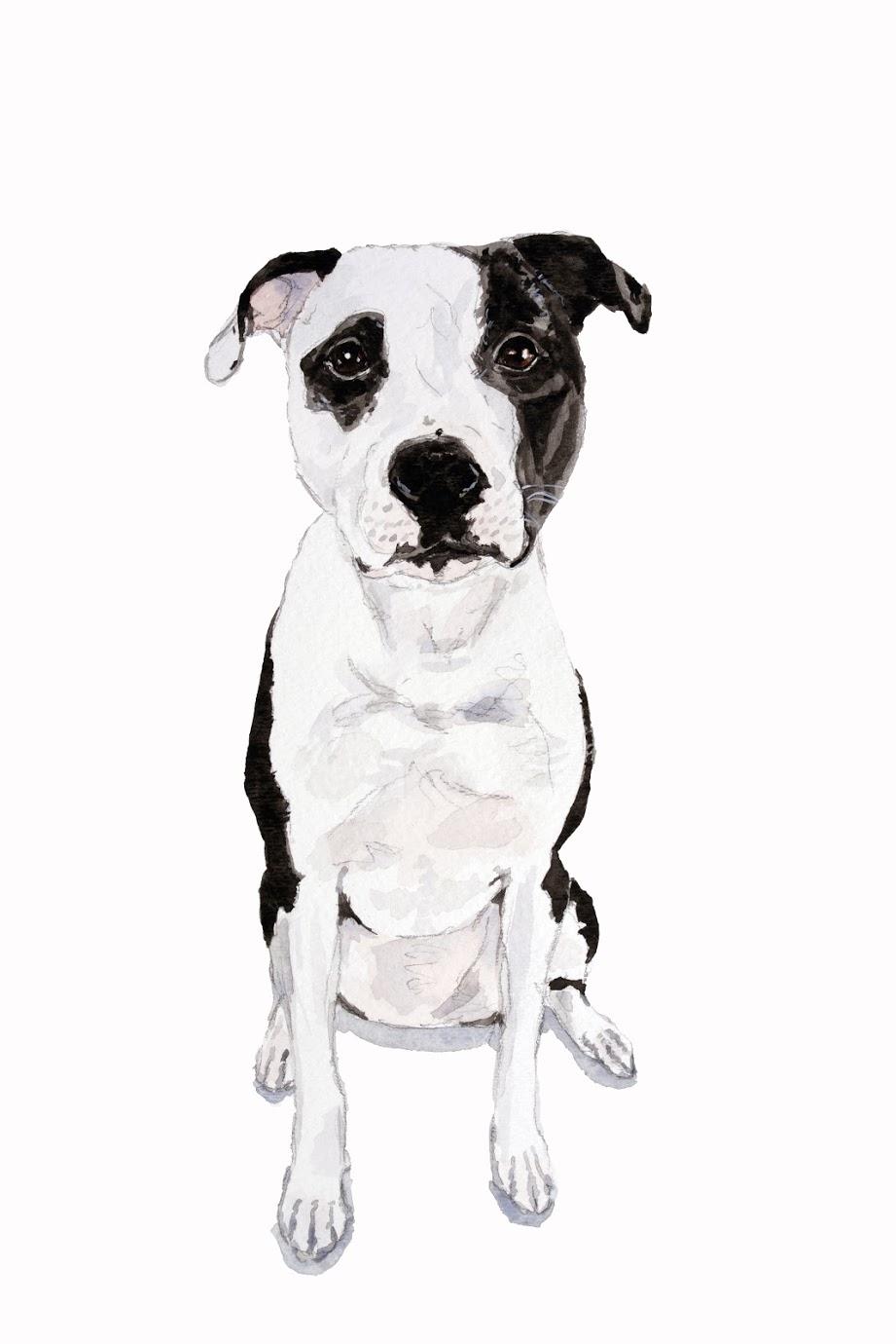 sincerely ashley | jasmine wisz-dog portrait