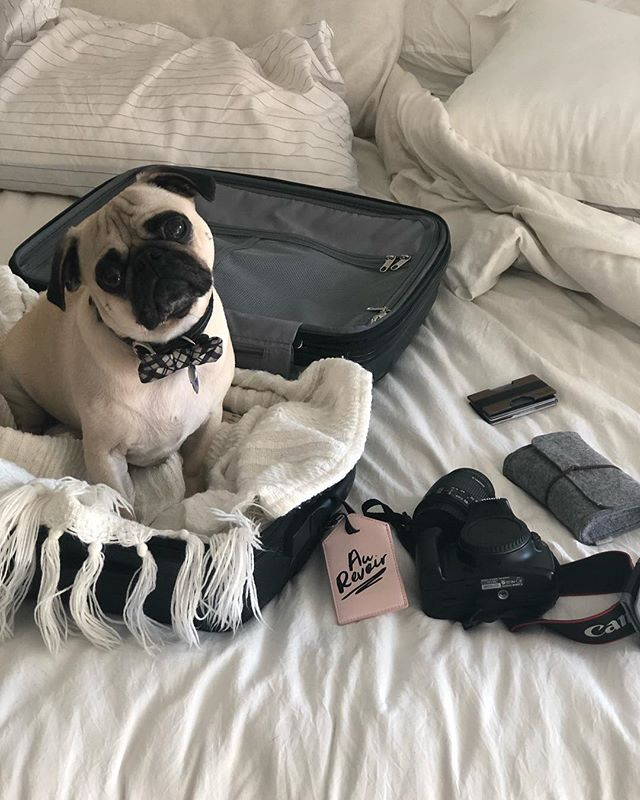 We're heading to Chicago this weekend! Don't think Pesto knows he isn't coming yet... 😅