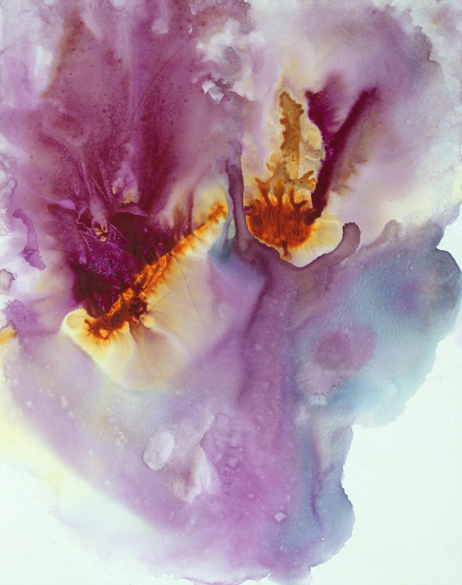 Purple Pansy Petals II - 14x11