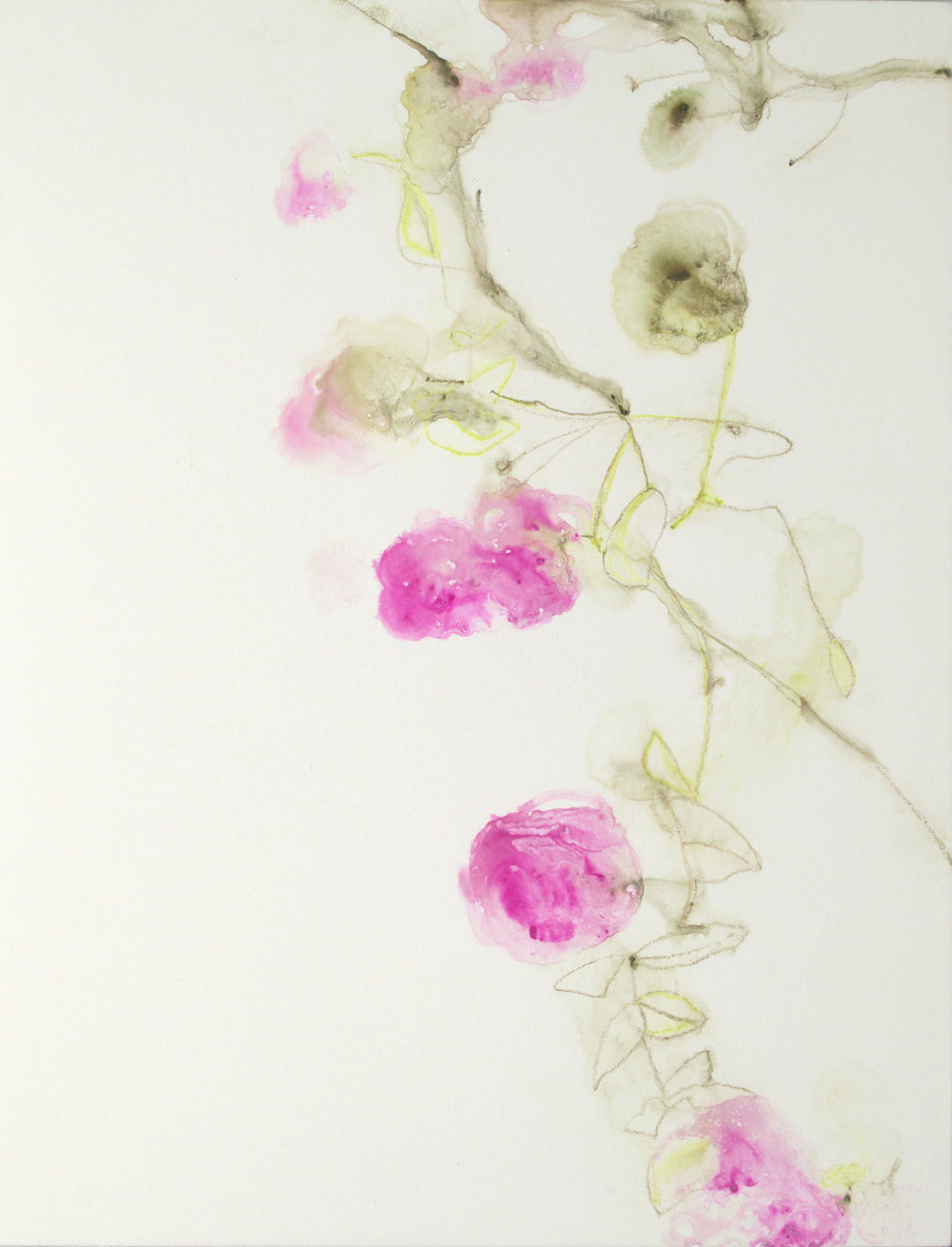 Pink Floral Vine II - 14x11