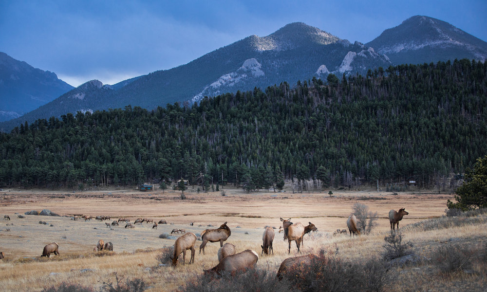 Wes_Ryan_Photography-rmnp_3337.jpg